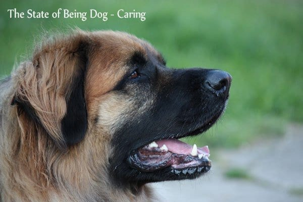 State of Being Dog   NYC Dog Trainer Services & Dog Wellness   Dog Training in Manhattan