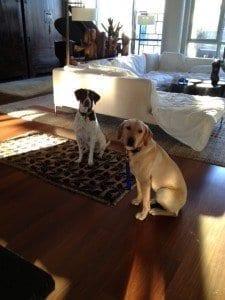 Georgie and LuLu Dog Photo | NYC Dog Trainer Services & Dog Wellness |