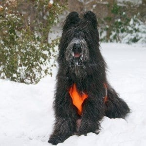 Snow Dog | NYC Dog Trainer Services & Dog Wellness |