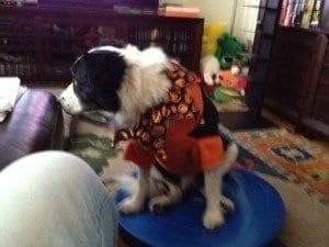 Haloween Dog | NYC Dog Trainer Services & Dog Wellness |