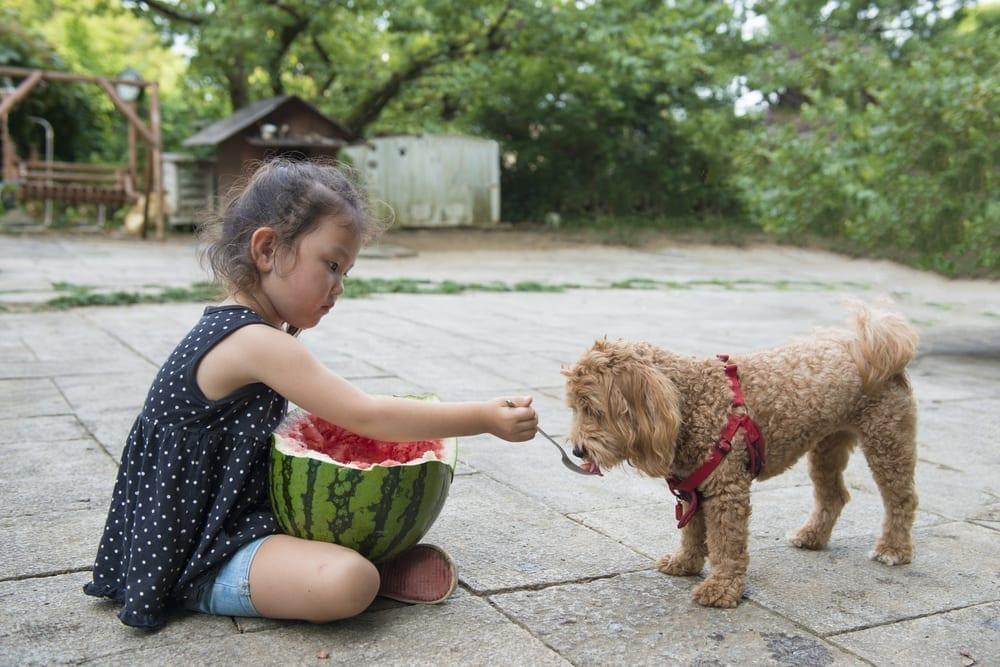 Manhattan Dog Trainer | Dog Relations NYC | Kid feeding watermelon to her dog