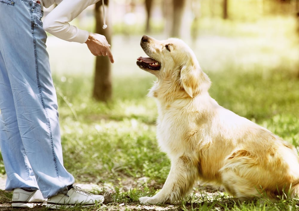 NYC Dog Trainer | Dog Relations | Training your dog with positive reinforcement