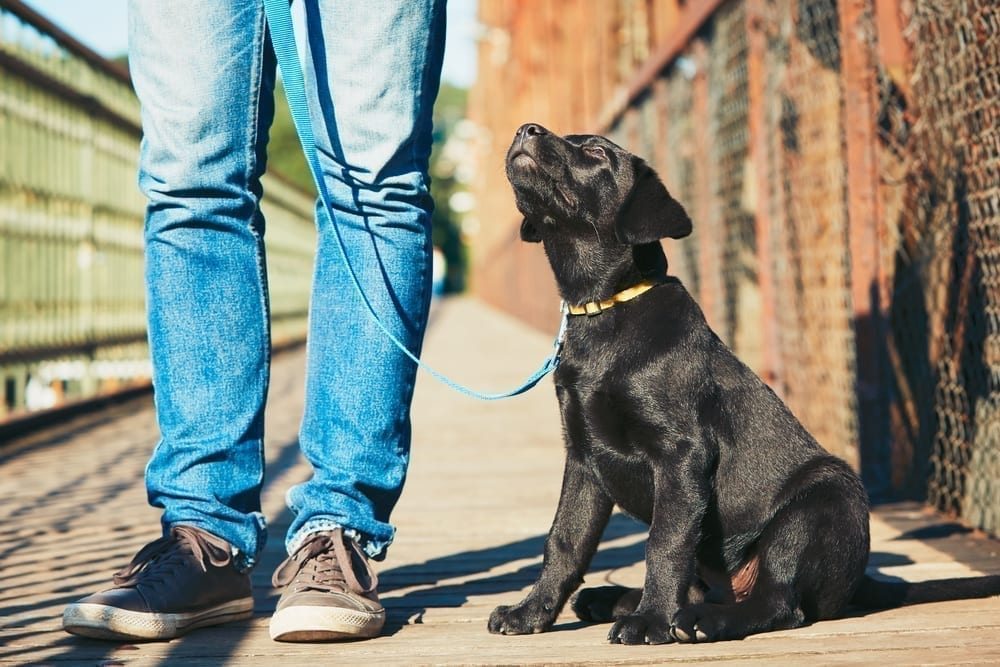 NYC Dog Trainer | Dog Relations | Teaching your puppy practical manners