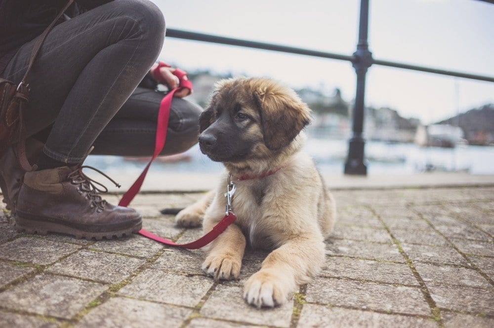 NYC Dog Trainer | Dog Relations | Training Your Puppy