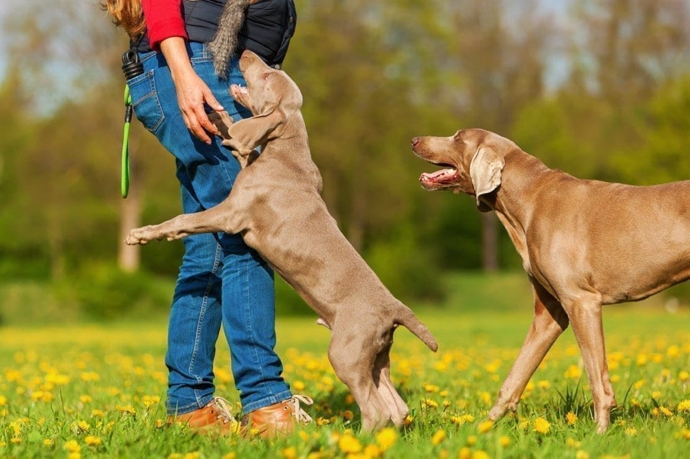 Dogs jumping and playing | NYC Dog Trainer | Dog Relations NYC