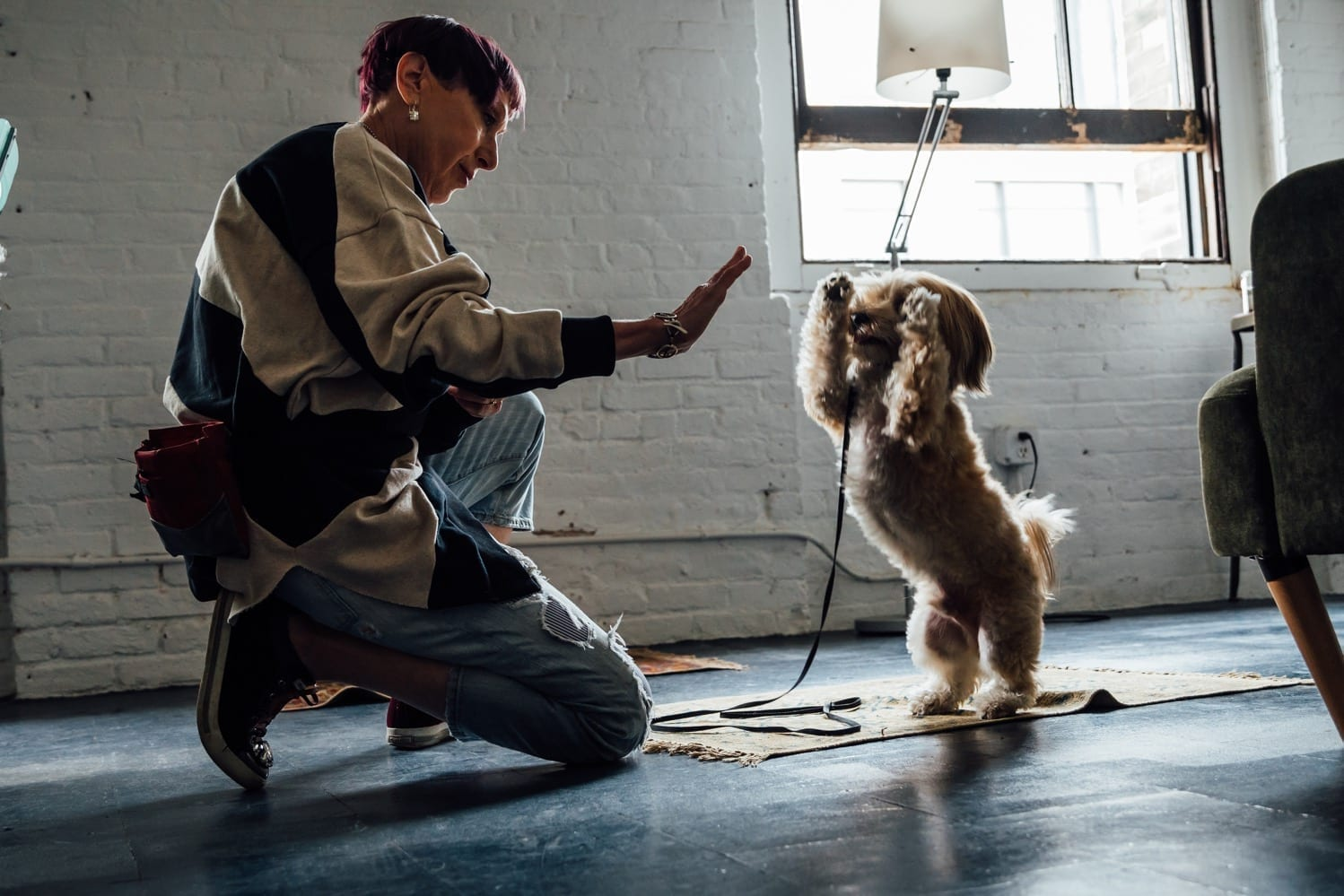NYC Dog Trainer Services & Dog Wellness   Dog Training at our studio