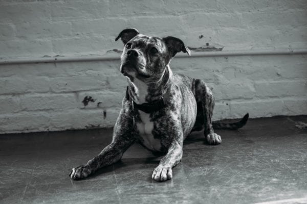 Maggie sits expecting a reward | NYC dog trainer | Dog Relations NYC