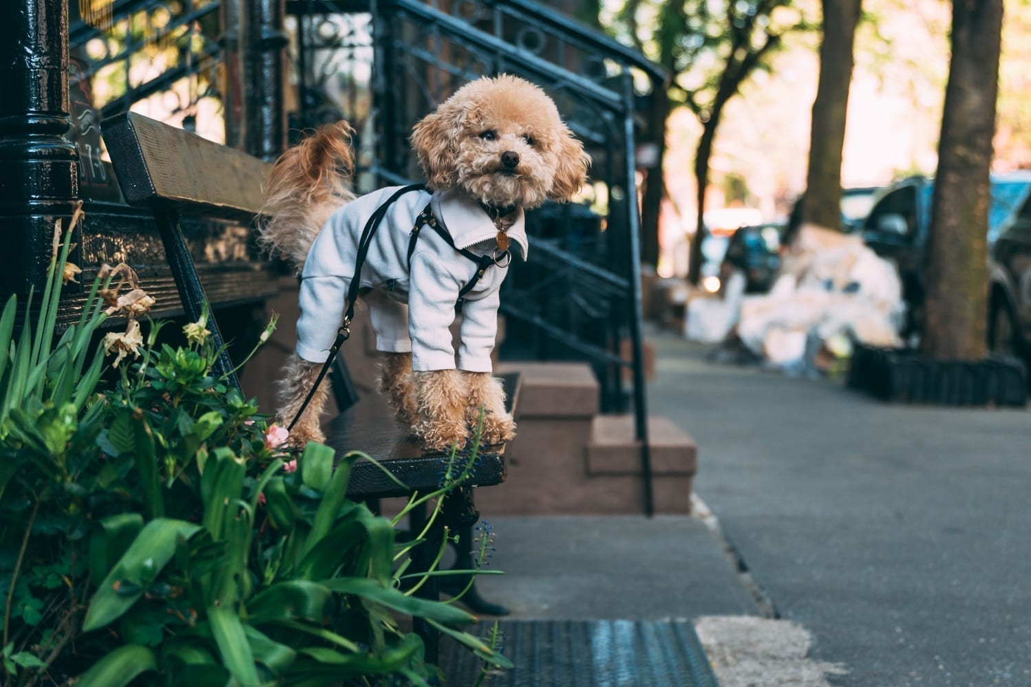 Puppy training | Pup sitting on bench | Dog Relations NYC