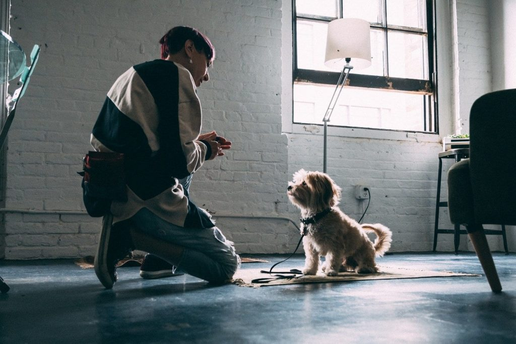 NYC Dog trainer Elisabeth Weiss works with small dog