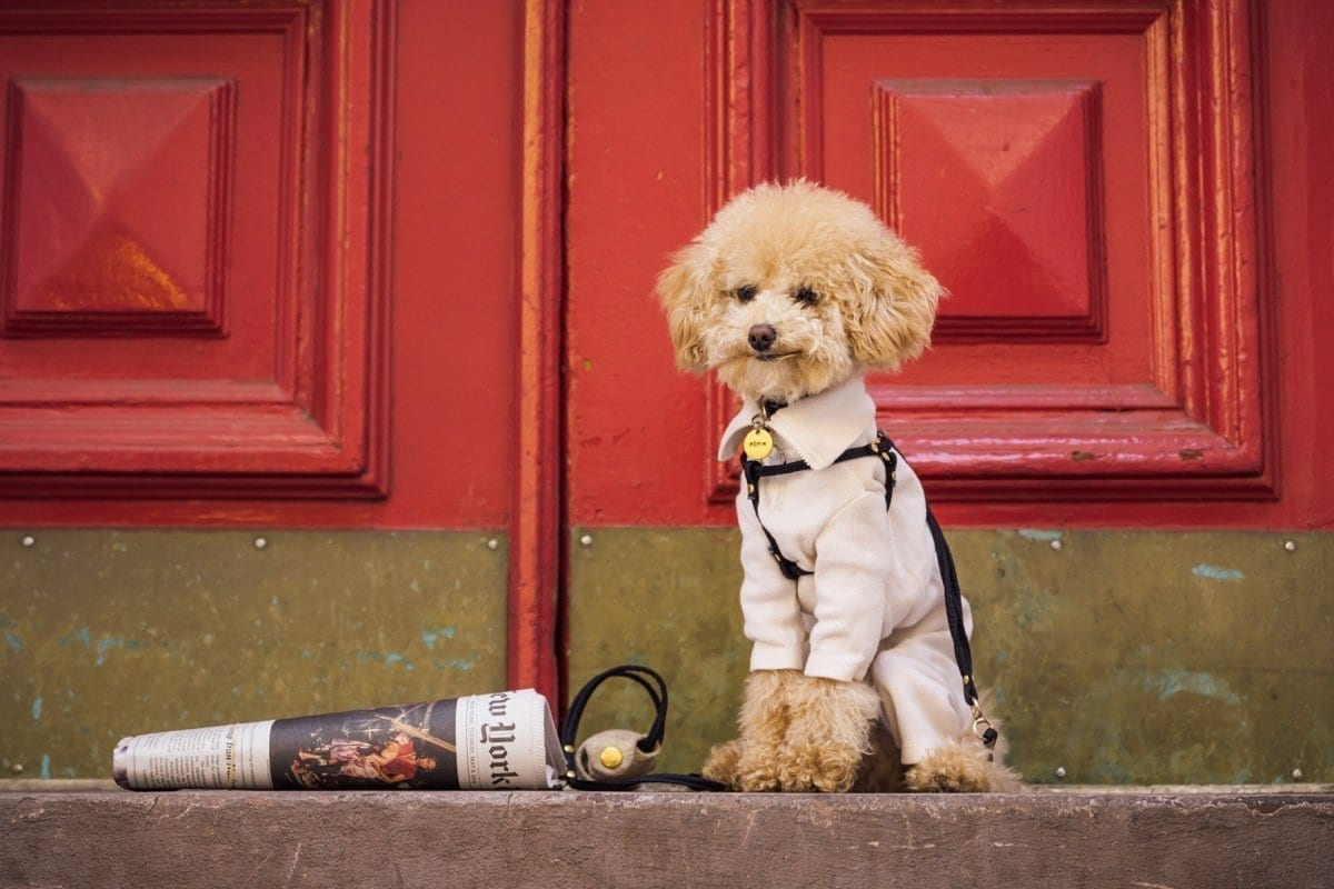 When should I train my puppy? | Dog Relations NYC
