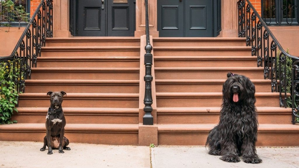 Dog training tips: managing behavior | two dogs sitting on townhome steps | Dog Relations NYC